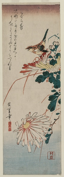 Chrysanthemum「Warbler And Chrysanthemums」:写真・画像(3)[壁紙.com]