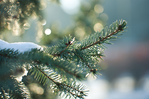 Uncultivated「Close up image of a snowy evergreen tree in winter 」:スマホ壁紙(5)