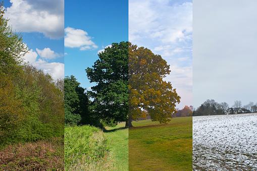 Oak Woodland「Oak tree in meadow through the seasons」:スマホ壁紙(5)
