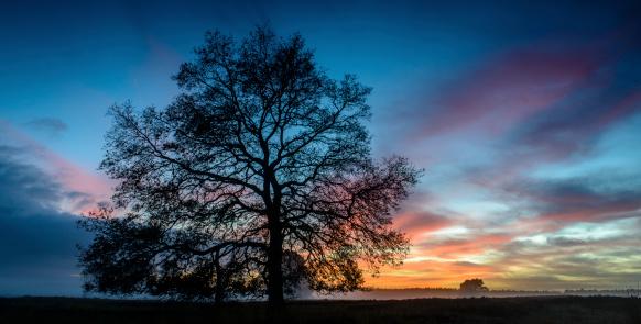 Single Tree「Oak tree in a winter sunset」:スマホ壁紙(3)