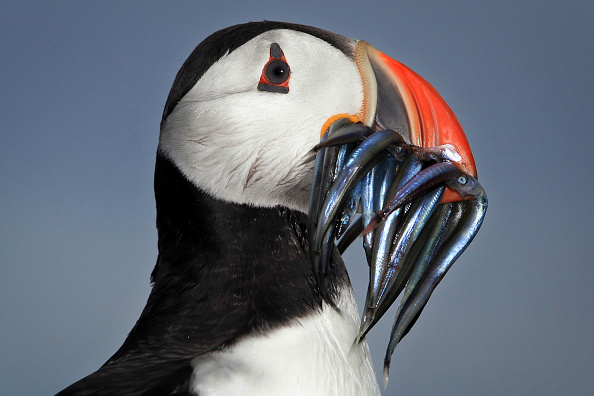 鳥「Visitors Enjoy The Wildlife At The Farne Islands」:写真・画像(18)[壁紙.com]