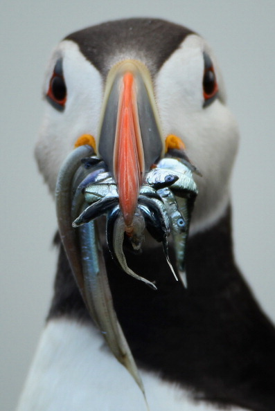 Beak「Visitors Enjoy The Wildlife At The Farne Islands」:写真・画像(8)[壁紙.com]