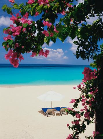 南国「Tropical beach」:スマホ壁紙(4)