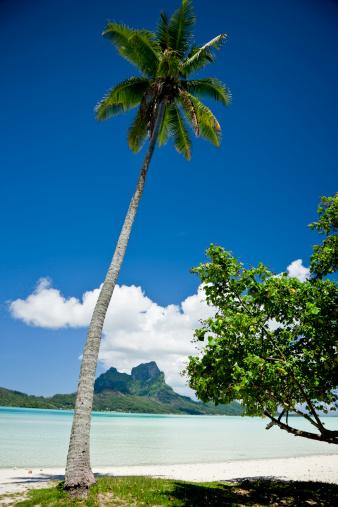 French Overseas Territory「Tropical Beach」:スマホ壁紙(14)