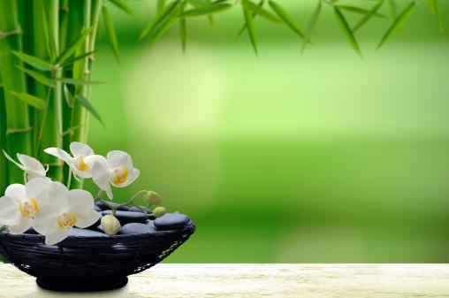Feng Shui「Tropical Beauty」:スマホ壁紙(11)