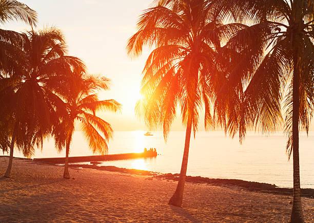 Tropical beach:スマホ壁紙(壁紙.com)