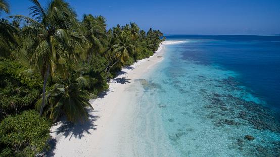 Indian Ocean「Tropical beach」:スマホ壁紙(8)