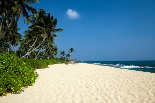 Sri Lanka「tropical beach Sri Lanka」:スマホ壁紙(8)
