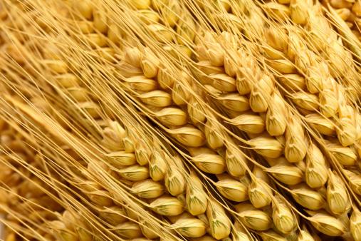極端なクローズアップ「小麦」:スマホ壁紙(19)