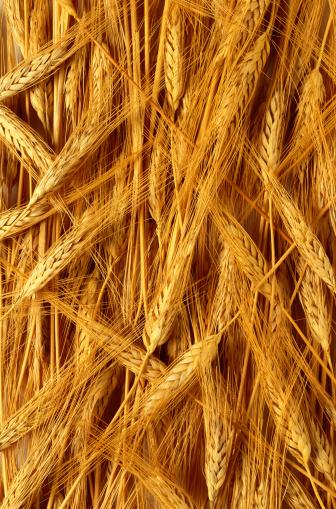 殻「Wheat」:スマホ壁紙(8)