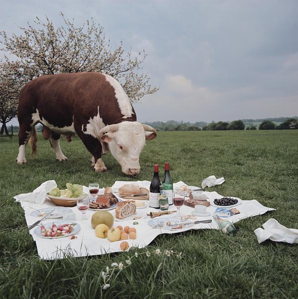 Picnic Blanket「Bull At A Picnic」:写真・画像(0)[壁紙.com]