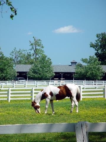 Stallion「Horse in Pasture」:スマホ壁紙(13)