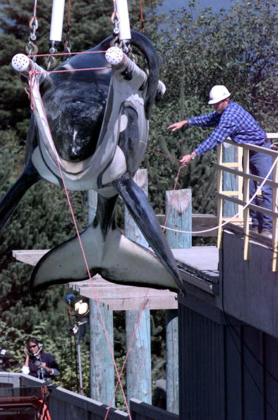 Oregon - US State「Keiko, the killer whale」:写真・画像(19)[壁紙.com]