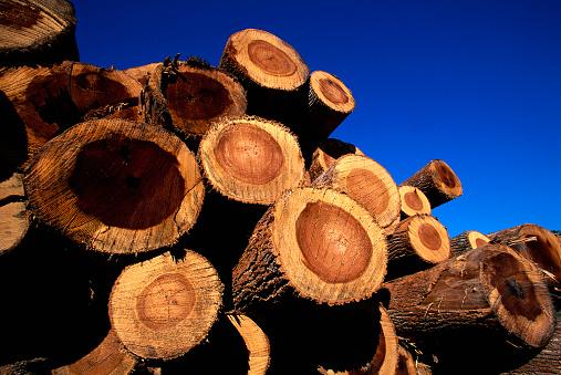 Log「Stack of Cut Logs」:スマホ壁紙(13)