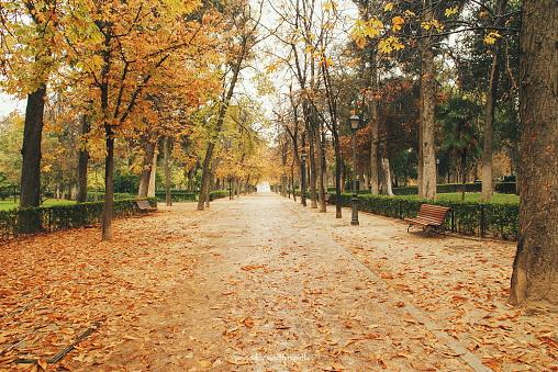 Local Landmark「Park del Buen Retiro in autumn, Madrid, Spain」:スマホ壁紙(13)