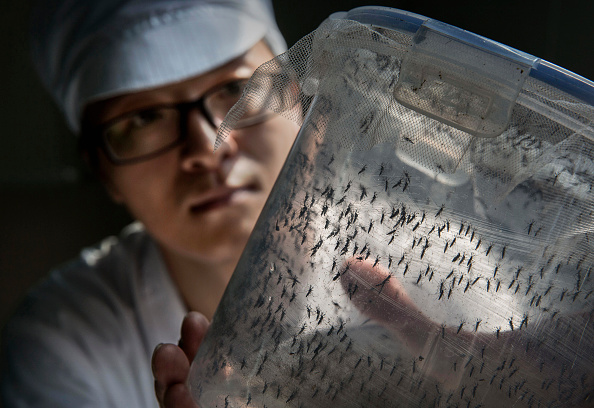 Infectious Disease「World's Largest Mosquito Factory Aims To Prevent Zika」:写真・画像(16)[壁紙.com]