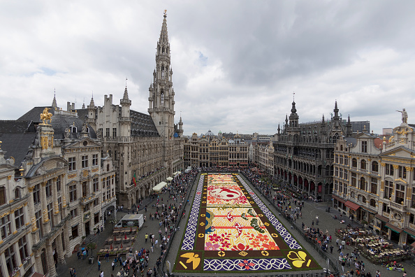 flower「Flower Carpet 2016 In Brussels」:写真・画像(19)[壁紙.com]