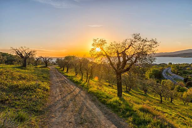 Italy, Umbria, Lake Trasimeno, Olive grove on the hills at sunset:スマホ壁紙(壁紙.com)