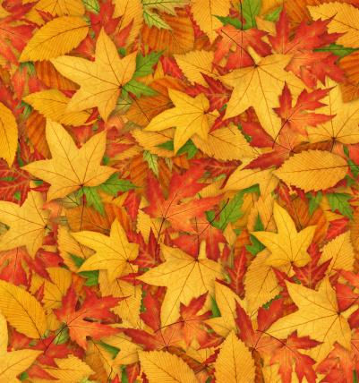 紅葉「秋の背景」:スマホ壁紙(9)