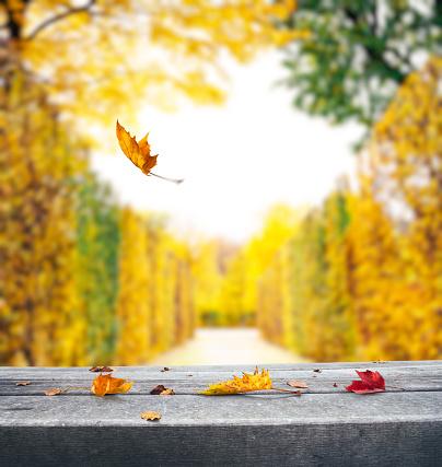 秋「落ち葉で秋の背景」:スマホ壁紙(3)