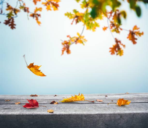 落ち葉で秋の背景:スマホ壁紙(壁紙.com)