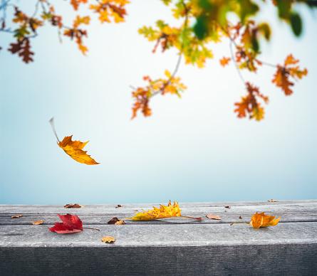 かえでの葉「落ち葉で秋の背景」:スマホ壁紙(17)