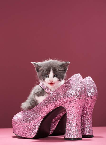 Kitten sitting in glitter shoes:スマホ壁紙(壁紙.com)