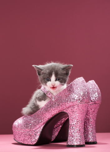 子猫「Kitten sitting in glitter shoes」:スマホ壁紙(18)