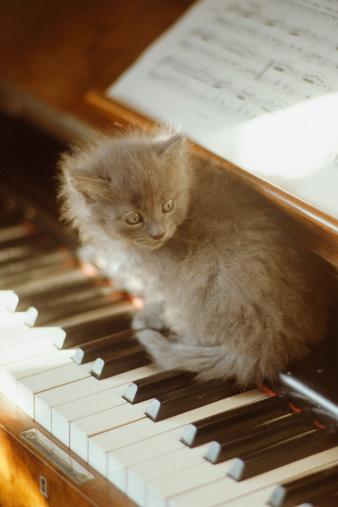 子猫「Kitten sitting on piano keyboard, close-up」:スマホ壁紙(11)