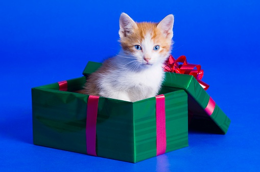子猫「Kitten Sitting in Gift Box」:スマホ壁紙(13)