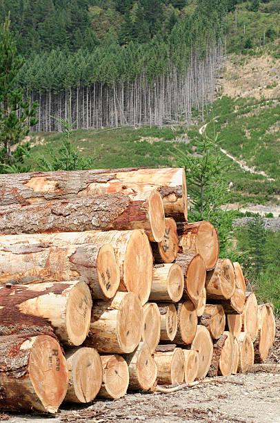 Timber Stack and Forest:スマホ壁紙(壁紙.com)