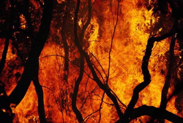 オーストラリア「Bushfires Threaten Homes North Of Sydney」:写真・画像(16)[壁紙.com]