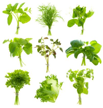 Mint Leaf - Culinary「Bunch of herbs (XXL)」:スマホ壁紙(19)