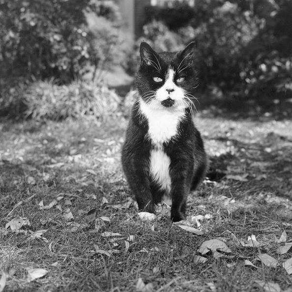 繊細「Winnie The Cat」:写真・画像(17)[壁紙.com]