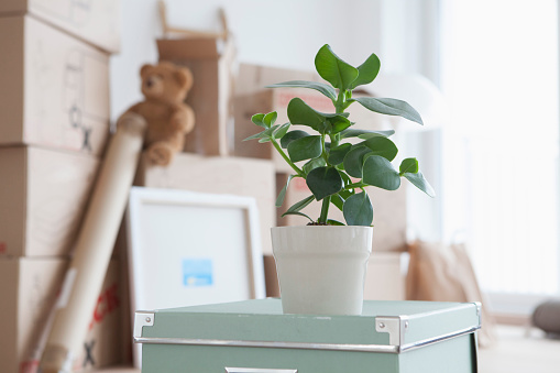 Munich「Piled cardboard boxes in flat, potted plant in foreground」:スマホ壁紙(1)