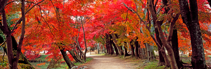 紅葉「Walkway and Autumn colors」:スマホ壁紙(13)