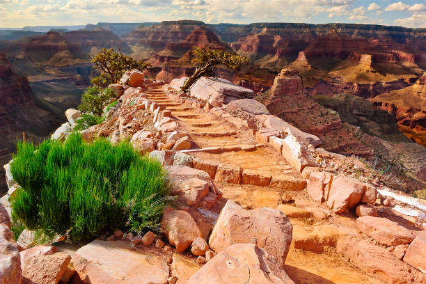 The Steps to Cedar Ridge, South Rim,  Grand Canyon, Arizona, America, USA:スマホ壁紙(壁紙.com)