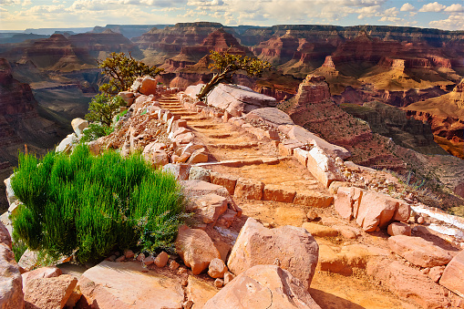 自然地理学「The Steps to Cedar Ridge, South Rim,  Grand Canyon, Arizona, America, USA」:スマホ壁紙(15)