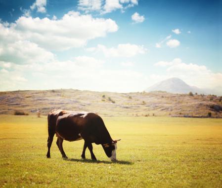 放牧地「牛の牧草地に光フィールド」:スマホ壁紙(1)