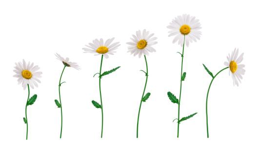 茎「絶縁型花」:スマホ壁紙(16)