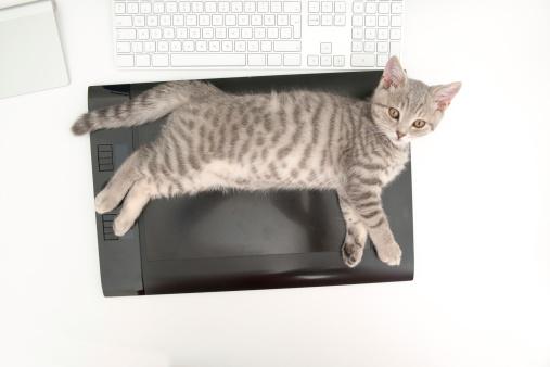 子猫「遊びの時間」:スマホ壁紙(16)