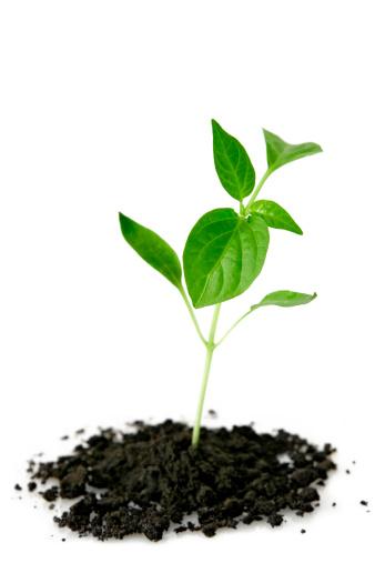 Planting「New life」:スマホ壁紙(3)