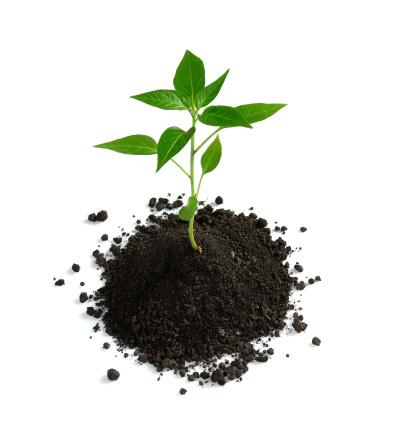 Planting「New life」:スマホ壁紙(7)