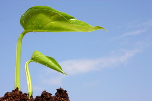 Planting「New Life」:スマホ壁紙(13)