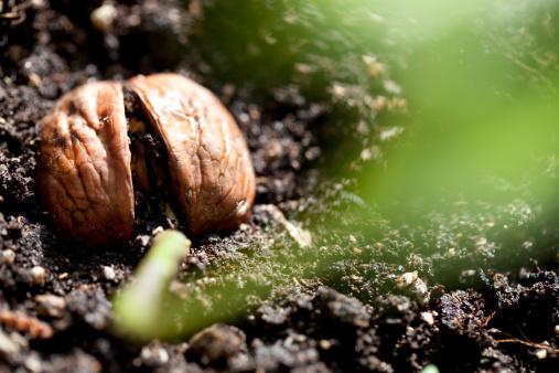 Planting「New life」:スマホ壁紙(0)