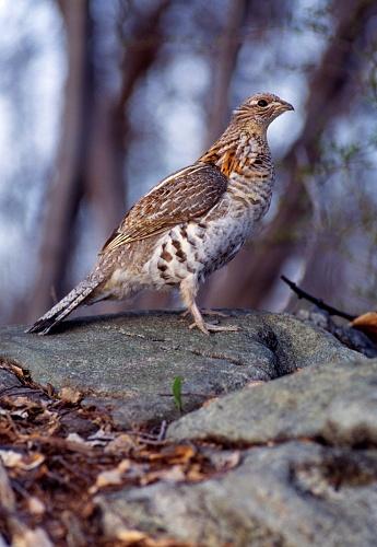 Choosing「Bird in natural habitat」:スマホ壁紙(14)