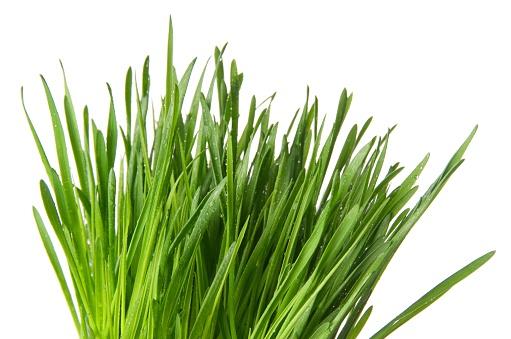 Wheatgrass「Wheat Grass」:スマホ壁紙(10)