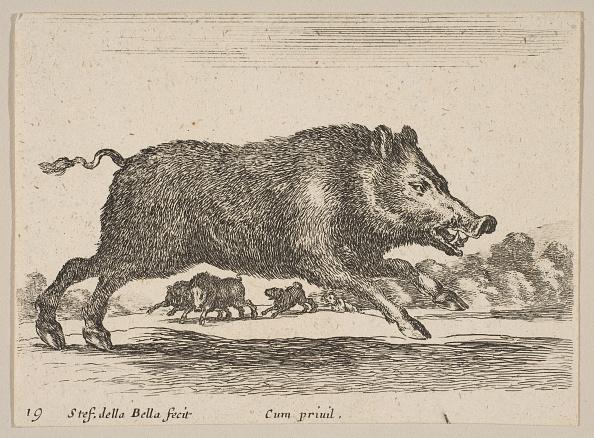Wild Boar「Plate 19: Wild Boar」:写真・画像(7)[壁紙.com]