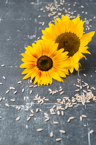 sunflower「Two sunflowers and scattered sunflower seeds」:スマホ壁紙(11)