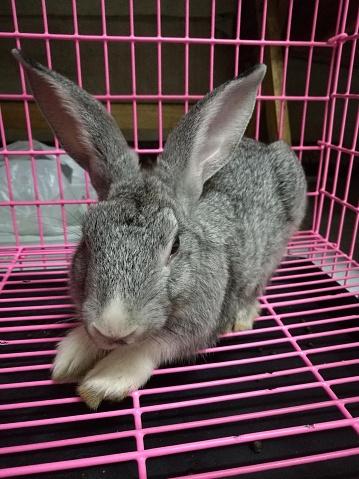 うさぎ「Rabbit in the cage」:スマホ壁紙(17)